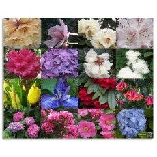 Portmeirion Flowers Montage Canvas Art
