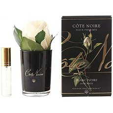 Cote Noire Single Ivory Rose With Fragrance in Black Glass