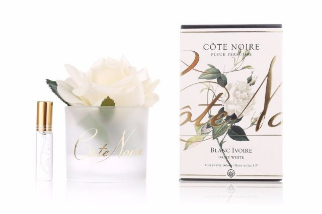 Cote Noire Cote Noire Single Ivory Rose With Fragrance in Frost Glass