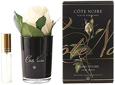 Cote Noire Cote Noire Single Ivory Rose With Fragrance in Black Glass