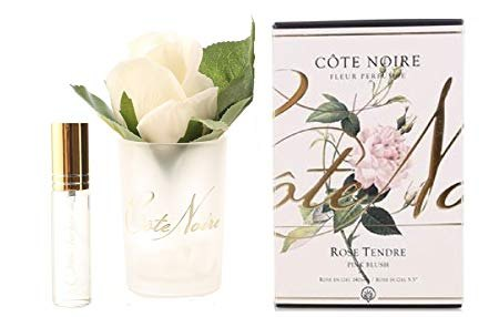Cote Noire Cote Noire Single Blush Rose With Fragrance in Frost Glass